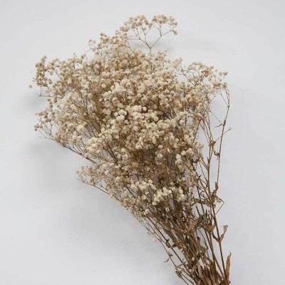 Dried Babys Breath Natural