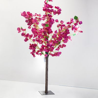 Bougainvillea Tree - Fuchsia