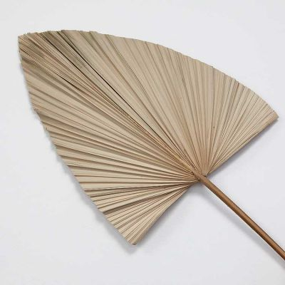 DRIED PALM LEAVES NATURAL 3 PACK