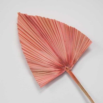 Dried Palm Leaves Pink 3 Pack