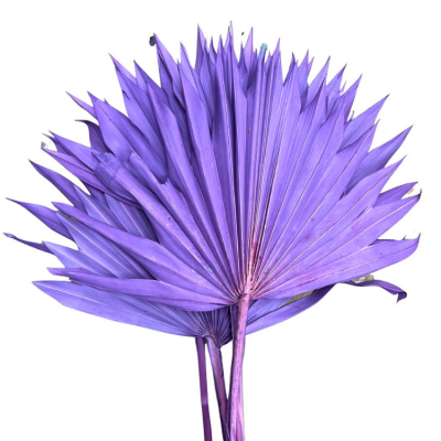 DRIED PALM SUN LEAVES 6 PACK LILAC