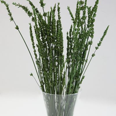 DRIED LAVENDER BUNCH GREEN