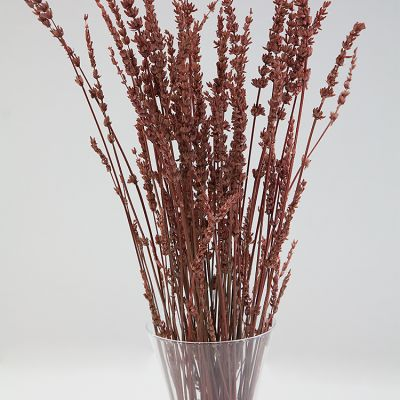 DRIED LAVENDER BUNCH RUST